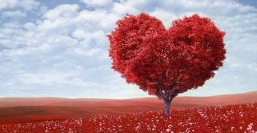 árvore coração