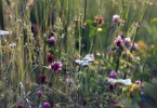 flores III